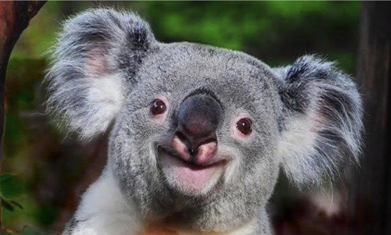 $10K to Wildlife Victoria Bushfire Appeal